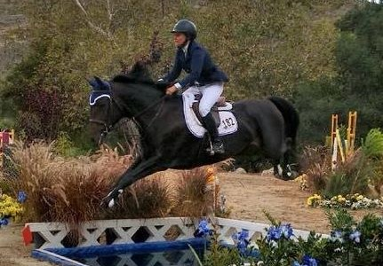 8 year old jumper mare