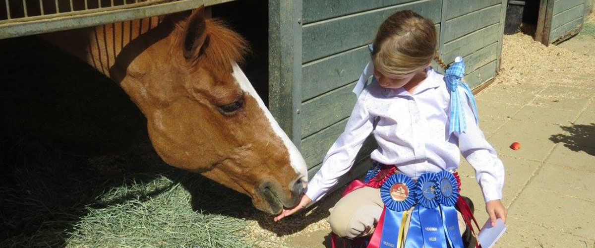 Find your Perfect Horse